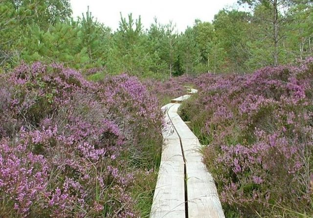 The Abbeleix Bog Walk has been voted as number 1
