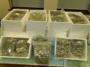 Cannabis has been seized