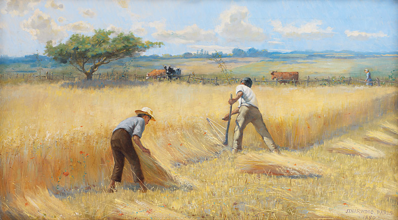 Fr Paddy: August - A time to harvest