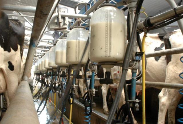 Dairy Farms Laois
